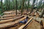 Hei Selfie Hunter! Yakin Gak Mau Foto-foto di Hutan Pinus Mangunan?
