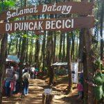 Mengagumi Diorama Jogja Dibalik Lebatnya Hutan Pinus Puncak Becici Dlinggo