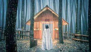Thumbnail Pinus Sari