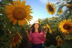 Inilah Kebun Bunga Matahari Bantul Yang Akan Memuaskan Hasrat Narsismu